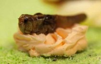 cakes-nasty-insects-7